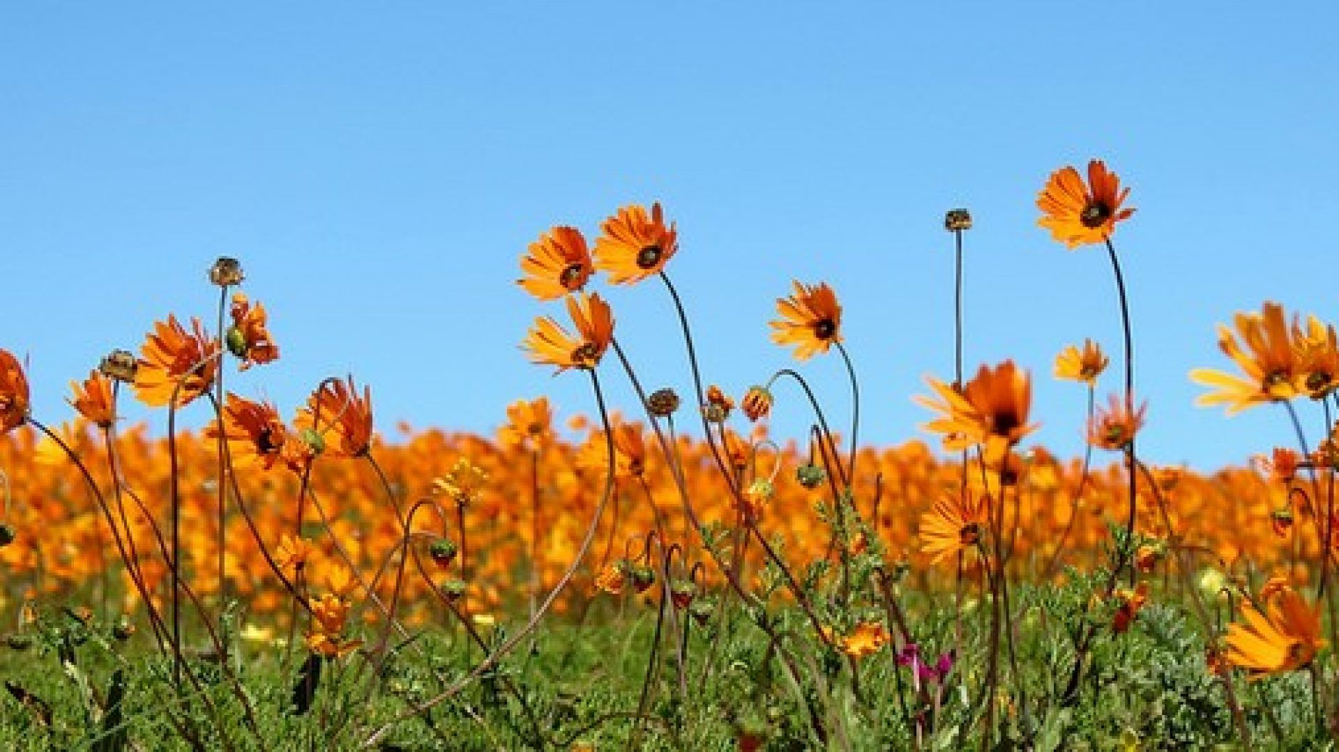 Namaqualand Flower Tours